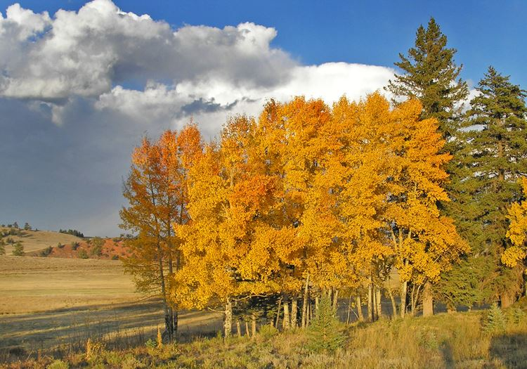Fall colored trees set against a blue sky